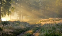 Sunlight on a misty morning in the forests south of Moscow  photo by Alex Mashtakov