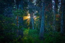 Sunlight peaking through the trees in White River National Forest Colorado