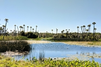 Sunny day in Florida at Orlando Wetlands Park