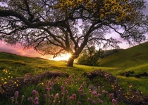 Sunol Regional Park during the Spring bloom By Victor Carreiro