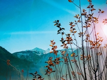 Sunrays hitting the leaves just right Manali