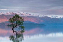 Sunrise at that Wanaka Tree New Zealand