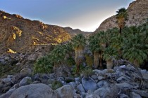 Sunrise from the  Palms Oasis in Joshua Tree National Park