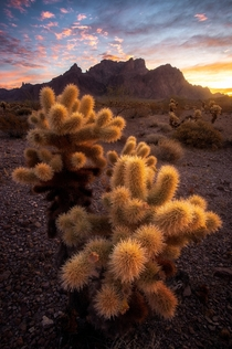 Sunrise in Arizona - Watch out for these evil teddy bears  IG mattfloresfoto