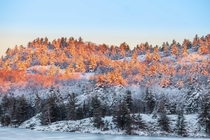 Sunrise lighting up some frozen Canadian wilderness Killarney Provincial Park Canada  Social mikemarkov