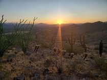 Sunrise near Cave Creek AZ with Ocotillo Cholla and Saguaro Cactus