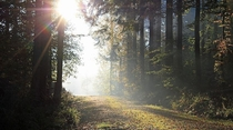 Sunrise on a forest trail - Vaihingen Germany