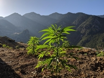 Sunrise over the Cannabis fields of the Rif Mountains Morocco