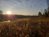 Sunrise over the wetlands - northern Ontario Canada