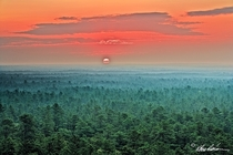 Sunrise over Wharton State Forest Southern NJ Pinelands - Albert D Horner