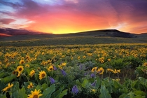 Sunset at Columbia Hills State Park in Washington  by David Gn