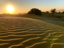 Sunset at Sam sand dunes Rajasthan