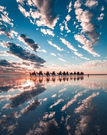 Sunset camel ride along the beach in Australia