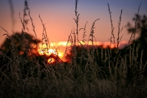 Sunset in overgrown field English countryside
