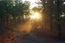 Sunset in the Pine Barrens