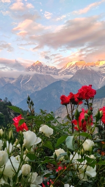 Sunset over Kinner Kailash peak of Kinnaur India