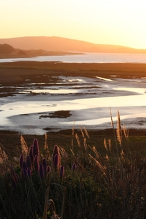 Sunset over the Tidal Flats of Bodega Bay CA