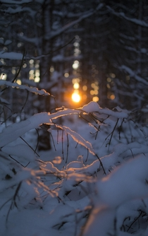 Sunset snow  branches in Mende France