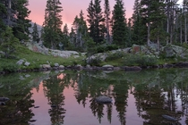 Sunset through the alpine forest of Colorado