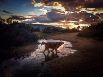 Sunset with Dog Enjoying a Mud Puddle