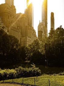 Sunshine in Central park