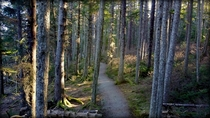 Sunshine through the forest Juneau Alaska  OC