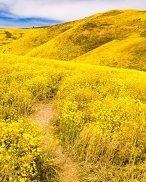 Super Bloom Trail  Carrizo Plain National Monument