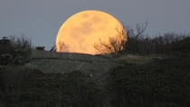 Supermoonrise over Roan Highlands USA