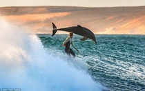 Surfer and dolphin Western Australia