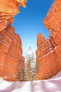 Surrounded by giant hoodoo walls at Bryce Canyon National Park UT  matt_thomson_visuals