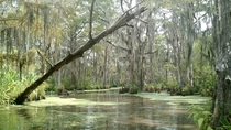 Swamps around Pearl River LouisianaMississippi USA N W