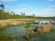 Swampy grasslands in The Kempen Belgium