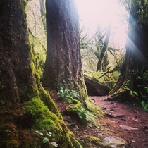Sweet Creek Falls Trail Mapleton Oregon