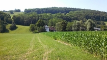 Swiss Corn Farm