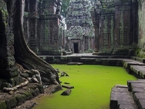 Ta Prohm Temple Angkor Siem Reap Province Cambodia