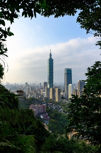Taipei  framed by trees from Xiangshan Trail