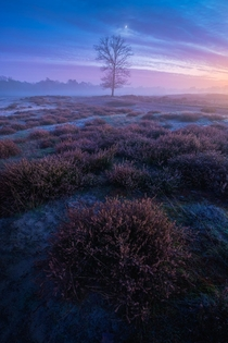 Taken about an hour after sunset the atmosphere turned really magical with subtle colours and a slight layer of fog at the heather fields in Hilversum the Netherlands x