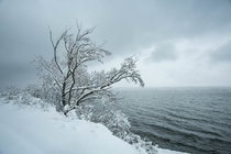 Taken during a snow storm on the shores of Cayuga Lake NY OC