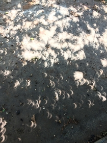 Taken in  during the eclipse I never knew that the shadows themselves would take on a scalloping effect as a result