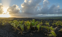 Taken near the Chain of Craters Road on the Island of Hawaii