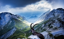 Taken on the peak of the breathtaking Mount Pilatus Switzerland The ibex was standing right at the edge of a  meter drop by Robin Kamp Mt Pilatus Switzerland  x-post rSchweiz
