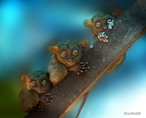 Tarsiers chilling on a branch