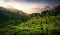 Tea Valleys South India  x  IG martinmorgenweck
