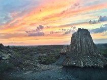 Teddy Roosevelt National Park has been making old dead wood look good for millions of years x
