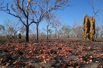 Termite mounds in Australias Northern Territory