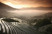 Terraced Rice Fields China x