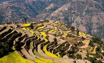 Terraced Rice Fields of Nepal  By Daigo Kuwabara  x-post rNepalPics