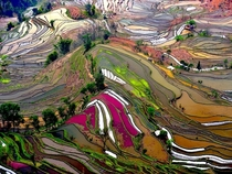 Terraced Rice Fields Yunnan China