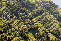 Terraced Vineyard in Cinque Terre Liguria