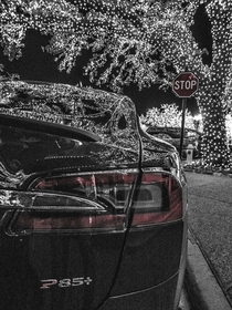 Tesla P under a lighted tree